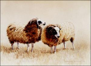 Original Watercolor painting of Jacobs sheep by Geraldine McKeown